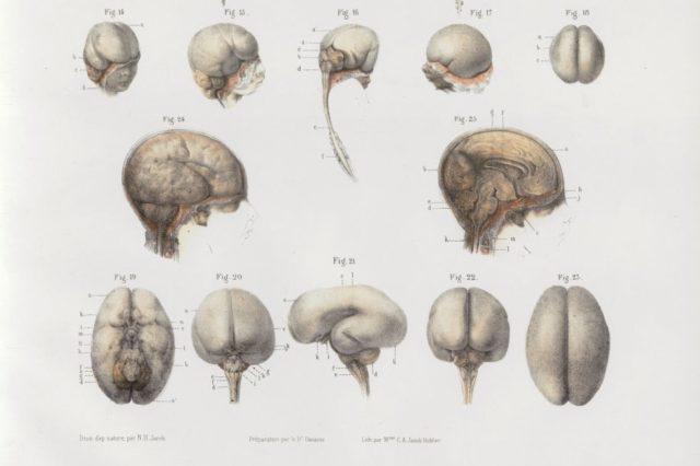 Anatomie, développement du SNC