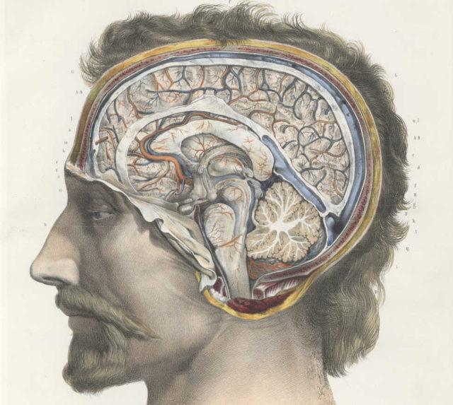 Traité complet de l'anatomie de l'homme